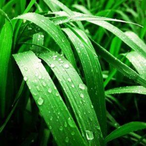 دانلود پاورپوینت جذب و انتقال مواد در گیاهان زیست دهم