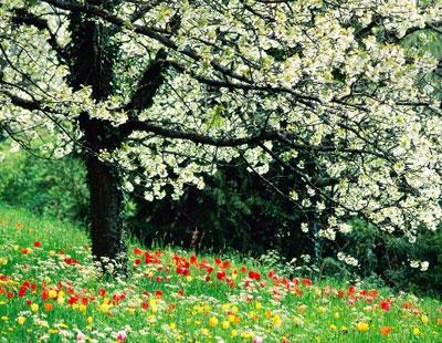 دانلود طرح درس انشاء پایه چهارم با موضوع فصل بهار