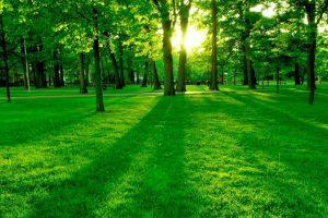 پاورپوینت بررسی طبیعت گرایی در شعر نیما و نادرپور