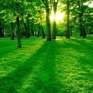 پاورپوینت طبیعت گرایی در شعر نیمایوشیج و نادرپور