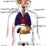 تحقیق غدد دستگاه هورمونی