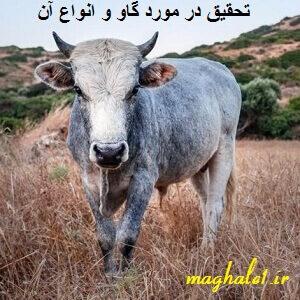 تحقیق در مورد گاو و انواع آن